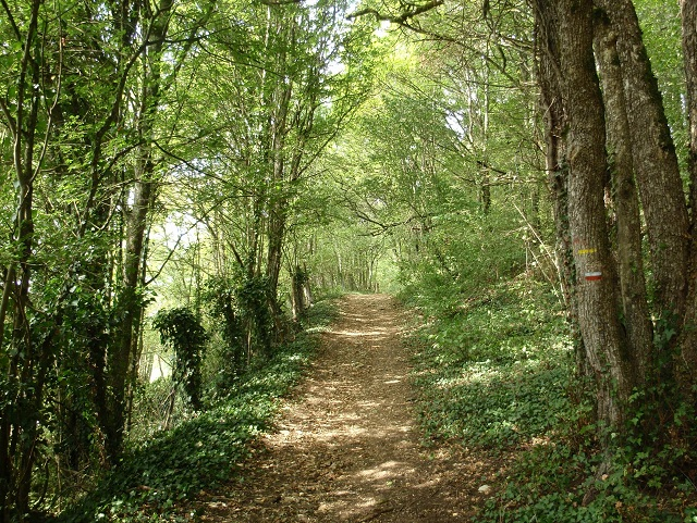 Shady path through the woods near Chamoux on Chemin de Vézelay